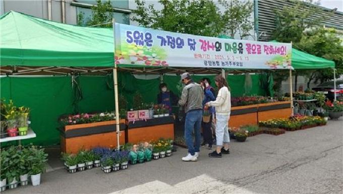 광탄농협 코로나19극복 위한 꽃 판매 이벤트